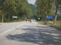 The horse we saved from roadkill, 24 Aug