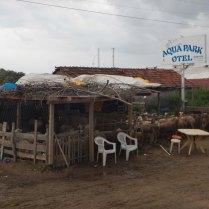 Aqua Park Otel for sheep, 17 Sept 14
