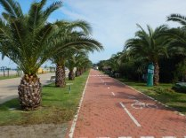 Empty bike lanes and palm trees in Batumi, 6 Oct 14