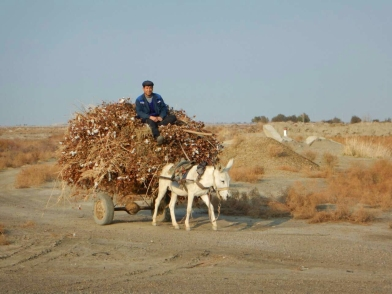 On the outskirts of Bukhara, 13 Nov 14