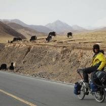 Meeting yaks, 27 Jan 15