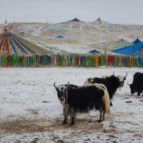 What to see when strolling around a village, 30 Jan 15
