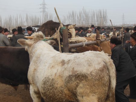 Getting a bit frisky, Kashgar, 4 Jan 15