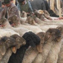 Neat and tidy, Kashgar, 4 Jan 15