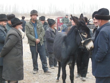 """That's a lovely ass"", Kashgar, 4 Jan 15"