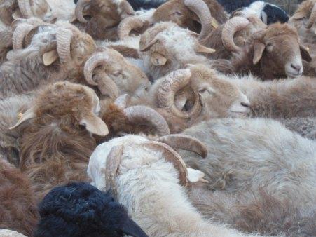 Chaos! Kashgar, 4 Jan 15